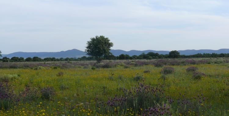 Primavera en la dehesa del Parque Nacional de Cabañeros. Foto de Mario Diaz.
