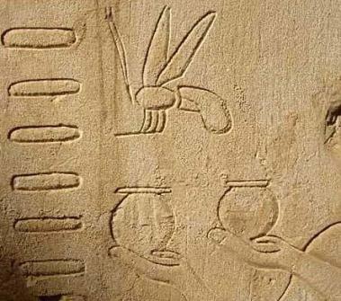 abeja egipcia