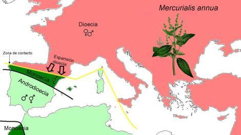 Imagen 3. Mapa de distribución de las poblaciones de Mercurialis annua ordenadas según su estrategia reproductora: dioica, monoica o androdioica.