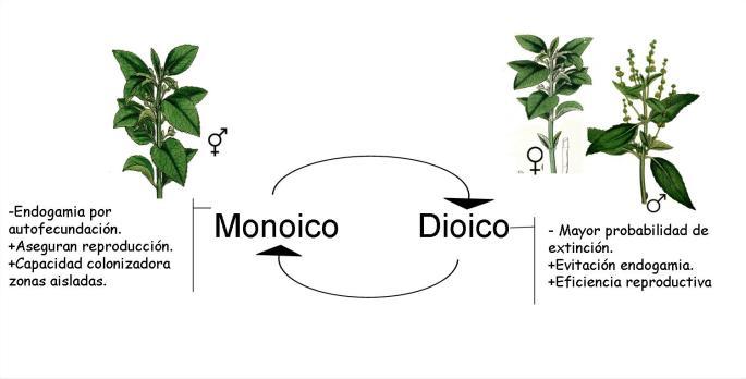 Ventajas de estrategias de reproducción monoicas y dioicas