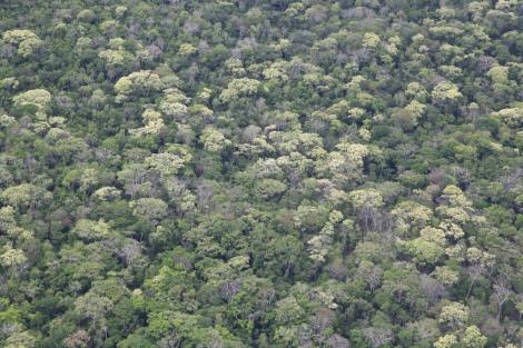 bosque chiquitano