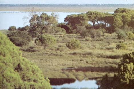 Doñana, situada en la margen derecha del estuario del Guadalquivir es uno de los parques Nacionales mas afamados de España. Creado en 1969 para proteger su rica fauna, comprende una parte de marisma y los arenales que la rodean y cierran el estuario.