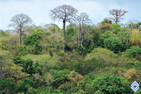 bosque-tropical-seco-colombia