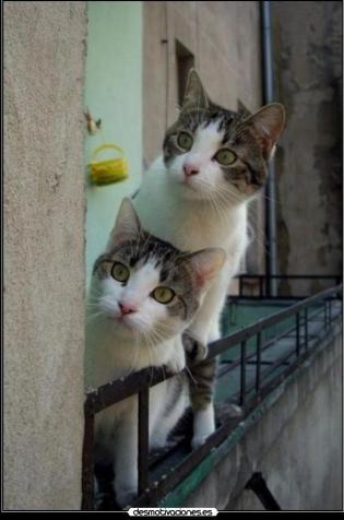 gatos cotillas 2