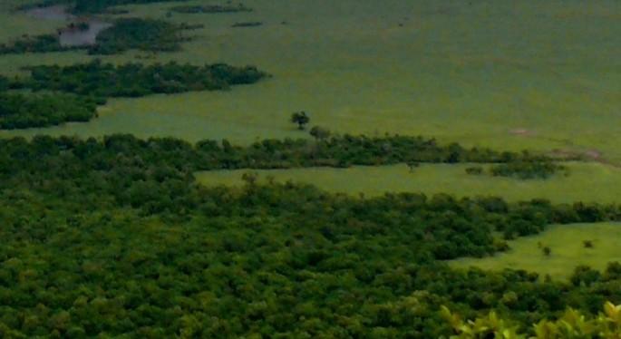 bosque y prado